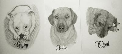 Trio-Sadie, Gypsy, Opal