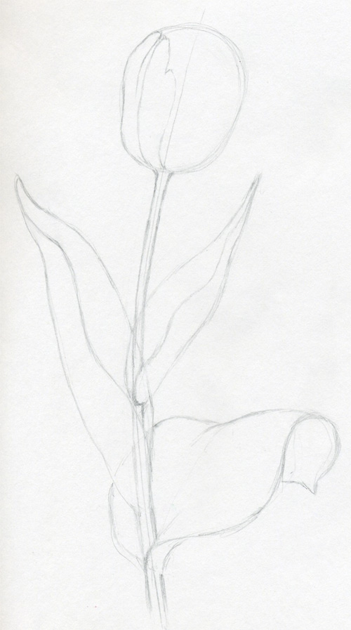 Gallery Realistic Flower Drawing Step By Step