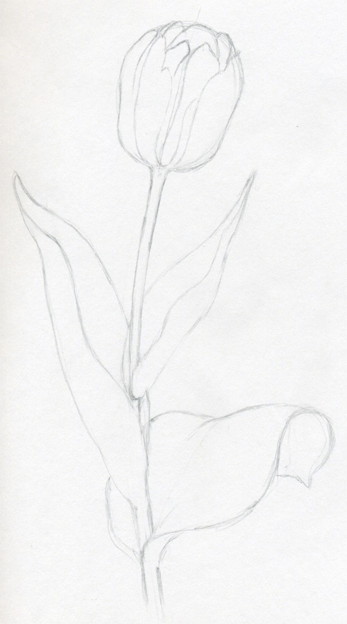 tulips are very easy to draw but three dimensional pictures have certain rules we must obey