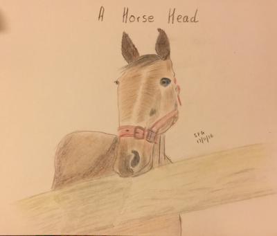 A Horse Head