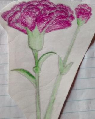 drawing of carnation