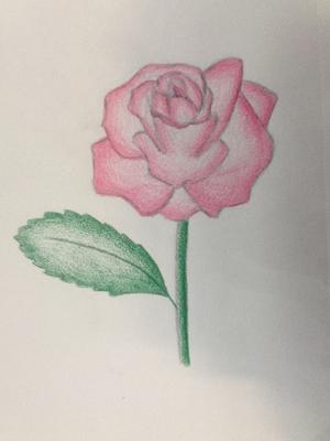 drawing of a rose 2
