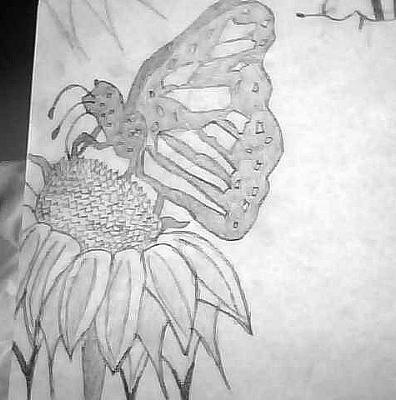 my butterfly drawing