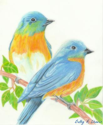 Colored Pencil Drawing Of Blue Birds