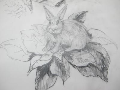 conejo arriba de la ponsetia