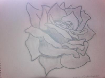 Contour rose drawing