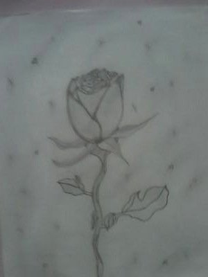 daddy's rose