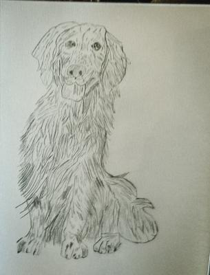 Dog named Goldie