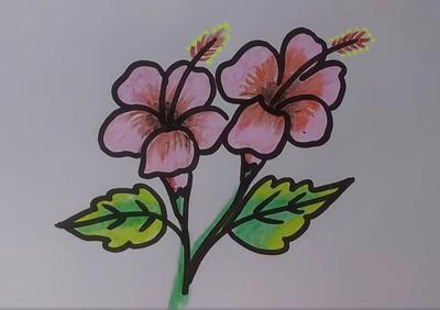 Draw china rose