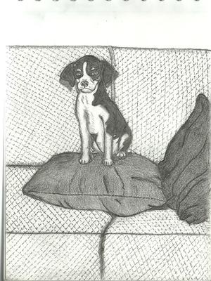 Drawing of my dog