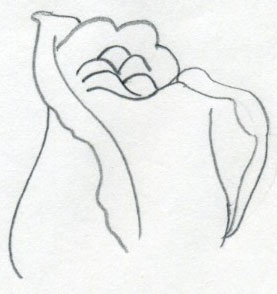 Draw a rose quickly simply and easily continue to draw add petals notice that almost every rose has its petals curled outward on the edges mightylinksfo