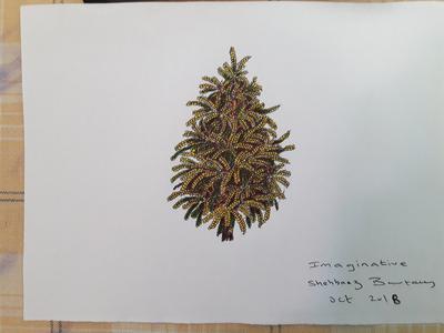 IMAGINARY TREE