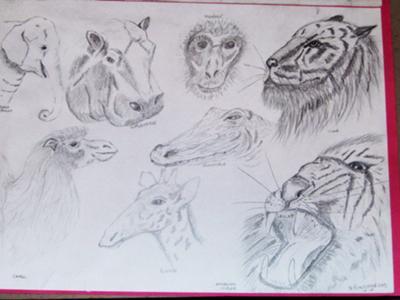My 1st wildlife scetches
