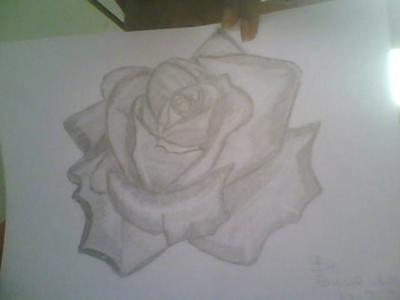 My first Rosey