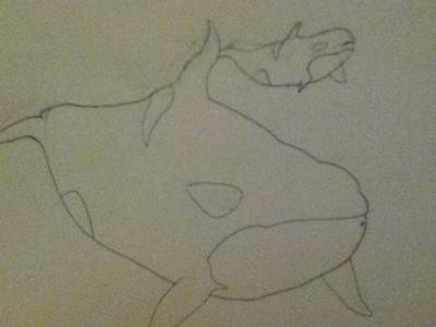 My orca whale drawing