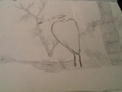 My first  drawing of a bird