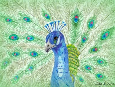 Peppy the Peacock