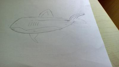 MY EPIC SHARK