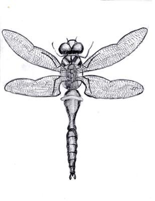 My Dragonfly
