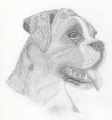 How To Draw A Boxer Dog Easy Step By Step