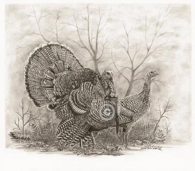 Woodland Turkeys